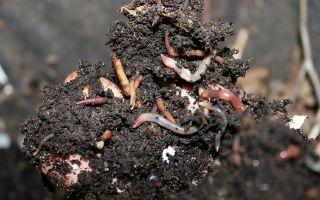 Гумус: описание и образование гумуса, классификация почвы, использование субстрата