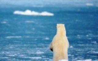 Какие океаны омывают антарктиду — пятый по величине материк, современные исследования антарктики