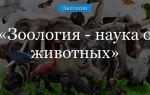 Зоология — наука о животных: основоположник, разделы, классификация животного царства