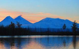 Где находится тайга: кто живет, деятельность человека, животные природной зоны