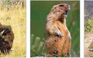 Америка: животный мир природных зон южного и северного материка, водная фауна