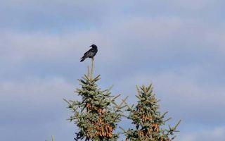 Какова мораль басни иван андреевича крылова «ворона и лисица»?