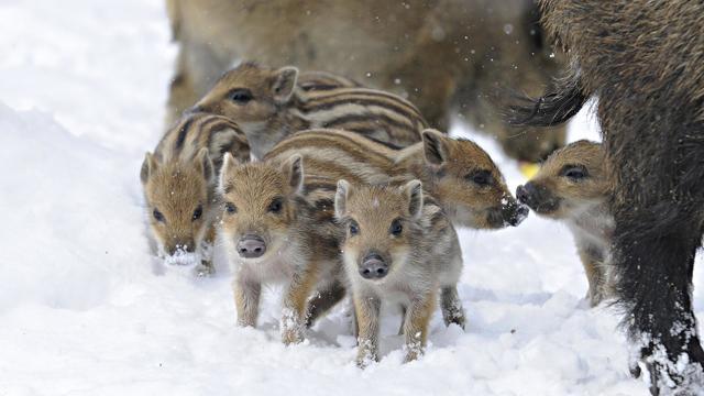 Животные степи России: список хищников и травоядных, исчезающие и редкие виды
