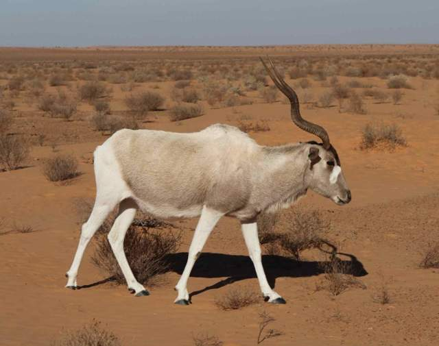 Кто живет в пустыне: животный мир на песчаных территориях Африки и России, чем питаются