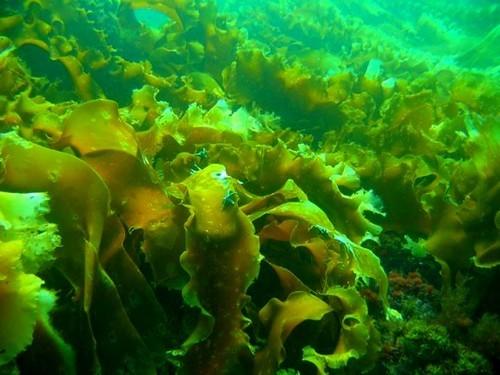 Особенности Северного моря: морские обитатели севера, интересные факты о рельефе