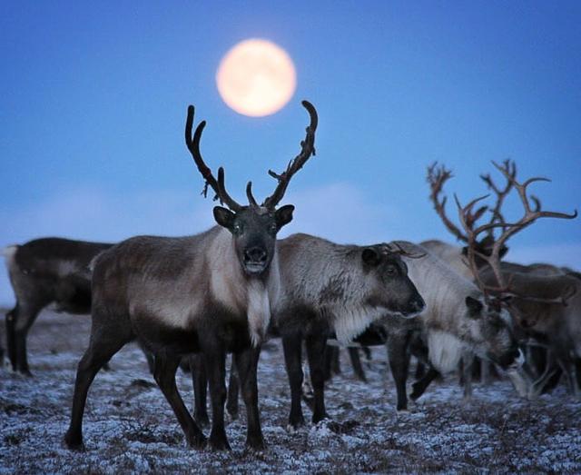 Северная Америка: рельеф и климат США, водные ресурсы, животный и растительный мир