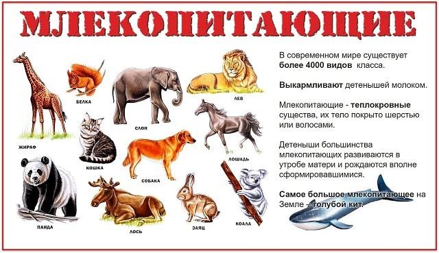 Отряды класса млекопитающие: общая характеристика и главные признаки животных и зверей