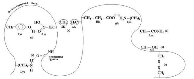Биологические функции белков, их состав, виды, денатурация полипептида до первичной структуры
