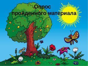 Значение растений в жизни: их функции и роль на Земле, что дают человеку растения