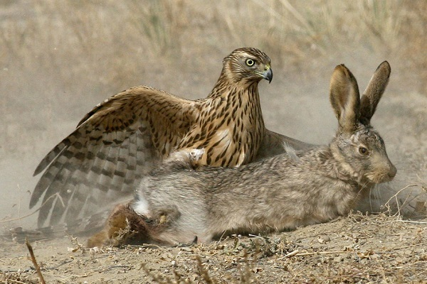 Классы птиц: строение пера, яйца, кровеносная система, разновидности птиц