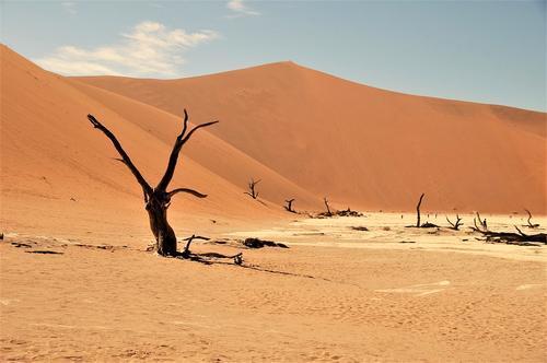 Африка природные зоны: почвы саванны, переменно-влажных и экваториальных лесов