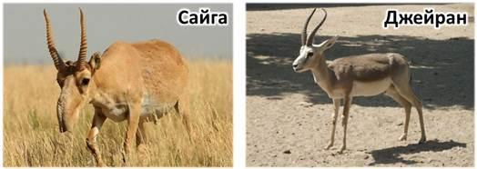 Класс млекопитающих: признаки представителей и основные характеристики, роль животных в природе