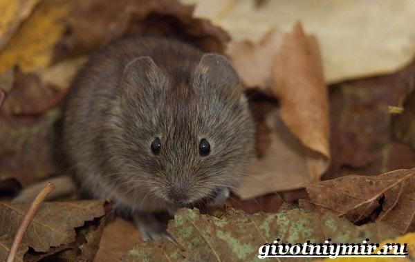 Животные Урала, птицы и растения, Красная книга, разнообразие природы