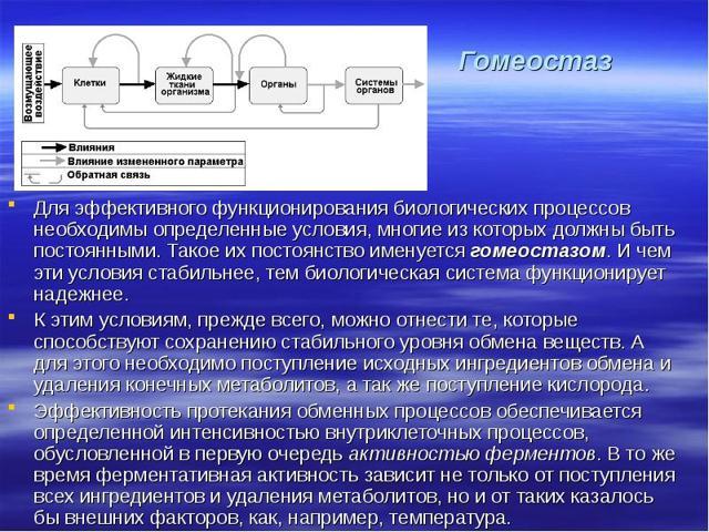 Понятие гомеостаза организма человека в биологии и медицине: определение, свойства, виды и параметры
