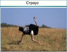 Естественный отбор: какие формы и виды существуют, движущие механизмы их действия, примеры