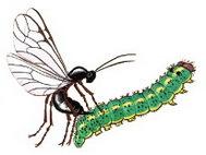 Насекомые-вредители: представители отряда, их названия и признаки, чем дышат