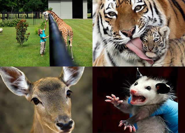 Что относится к живой природе и неживой: виды, схемы, примеры объектов и значение