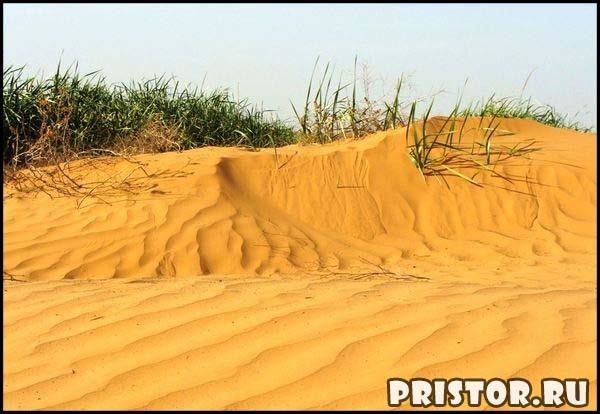 Природная зона пустыня: характеристика, какие животные живут, где есть в России