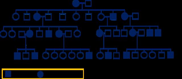 Исследование генетики человека: генеалогический, цитогенетический методы и другие
