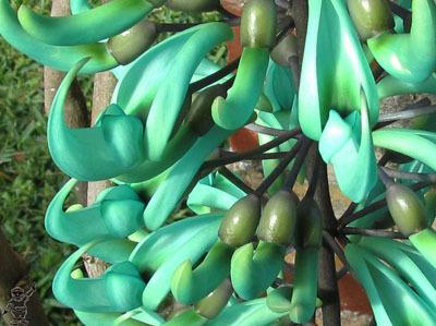Растения Африки: где находятся необычные цветы тропических саванн, редкие виды