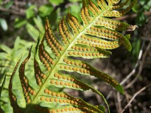 Оплодотворение растений и способы размножения: спорами, семенами, генеративное