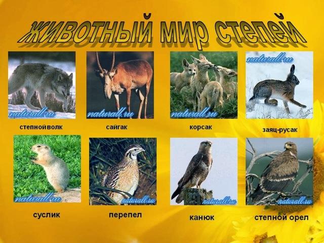 Почвы и природные зоны: климатические зоны Земли, субтропические леса России, черноземные почвы