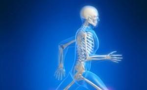 Сколько костей в теле взрослого человека: из чего состоит наш скелет
