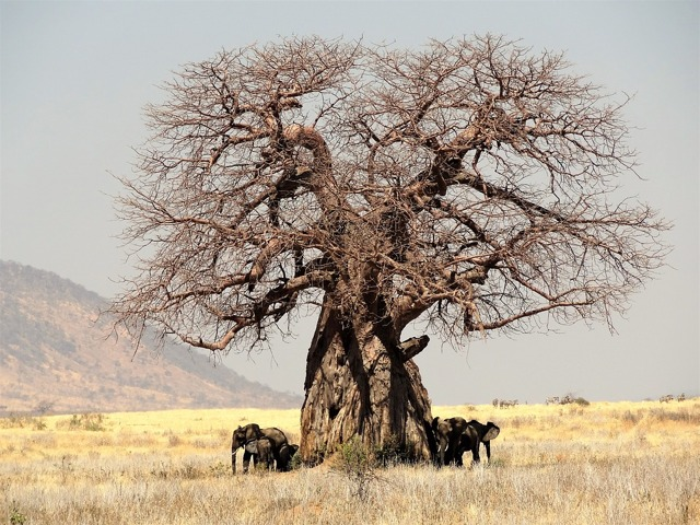 Растения в пустыне: что растет в пустынях Азии и других, жители, климат