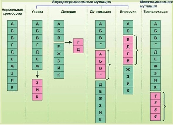 Хромосомная мутация у человека: виды, причины возникновения, хромосомные болезни