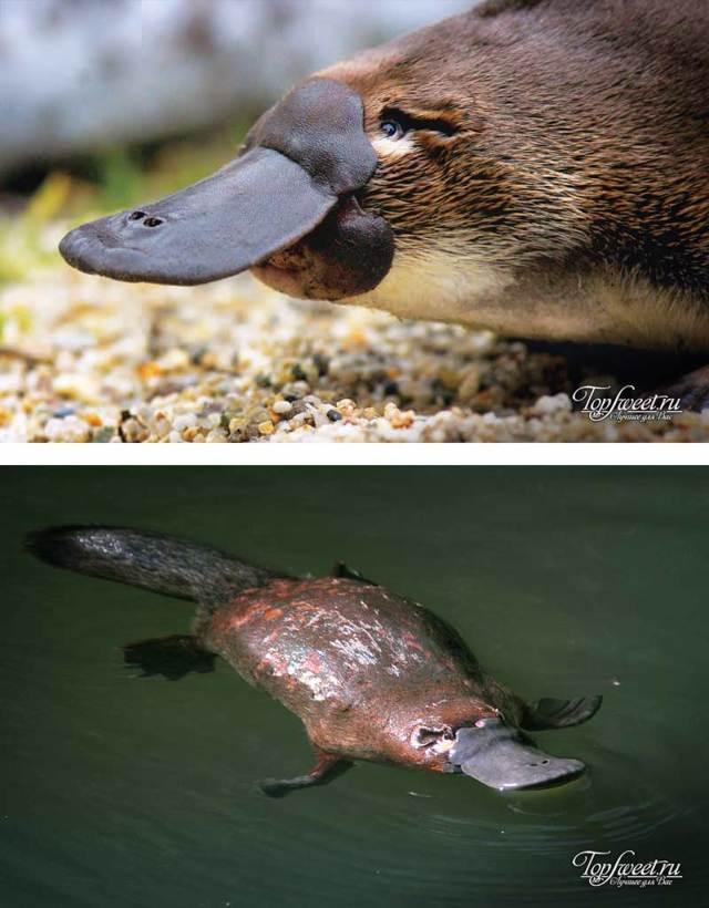 Австралия: животный мир, интересные факты, уникальные животные с названиями и описанием