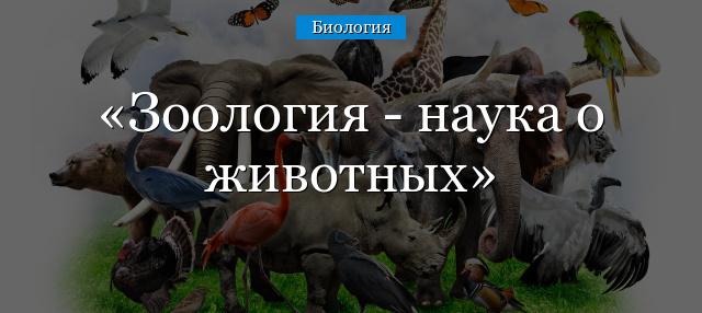 Зоология - наука о животных: основоположник, разделы, классификация животного царства