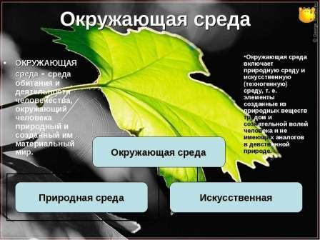 Наука экология: что изучает, влияние на человека, цели и основные понятия