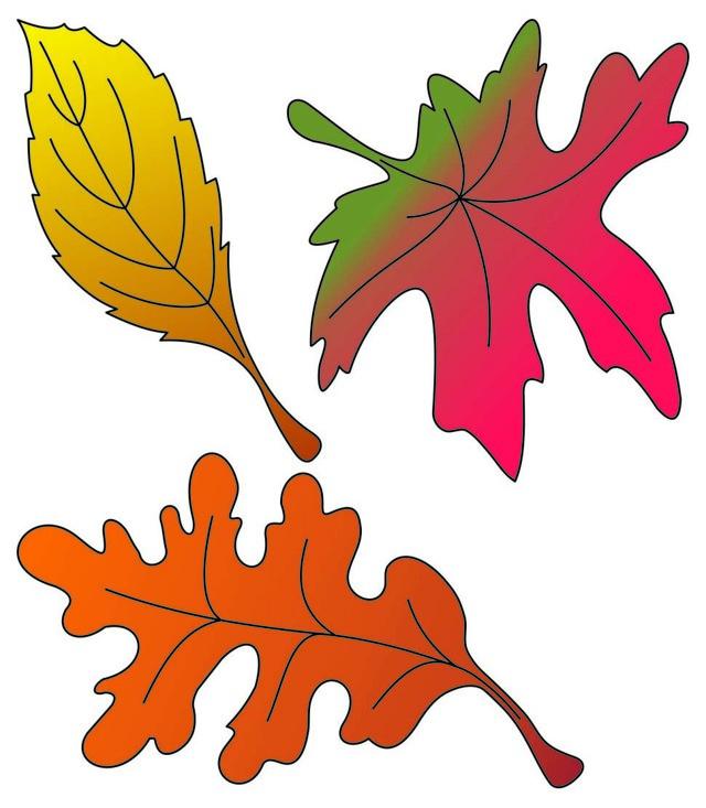 Неживая природа: определение, какие объекты и явления к ней относится, примеры