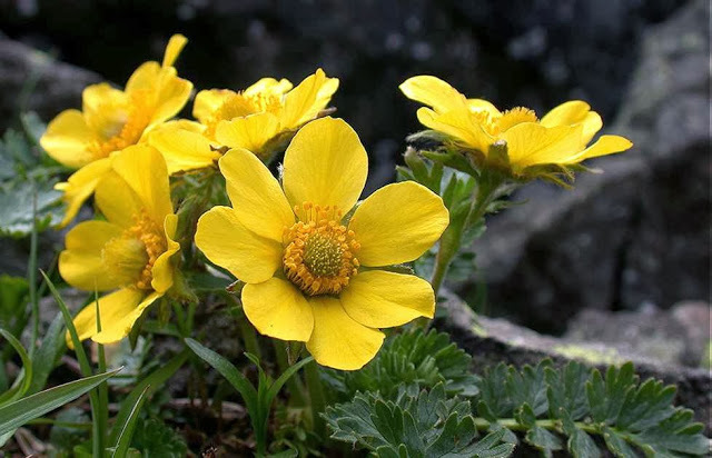 Растения семейства розоцветных: представители и их морфологическое описание