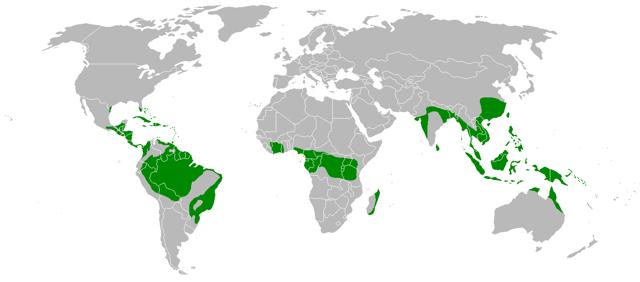 Природные зоны лесов: что характерно для разных климатов, карта, растительный и животный мир