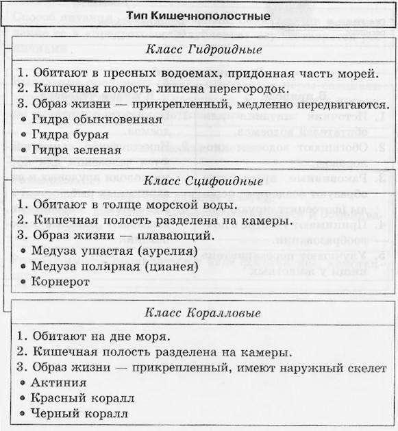 Кишечнополостные: класс, подцарство Многоклеточные, что свидетельствует о древности Кишечнополостных