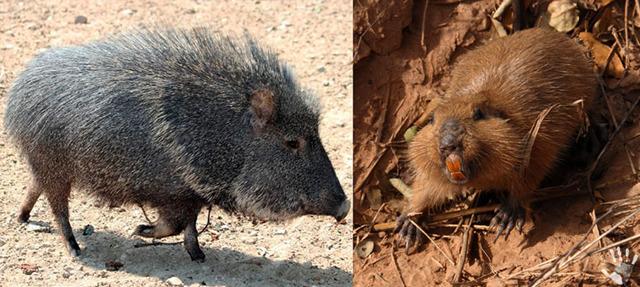Южная Америка: животные, растительный мир, птицы, представители Красной книги