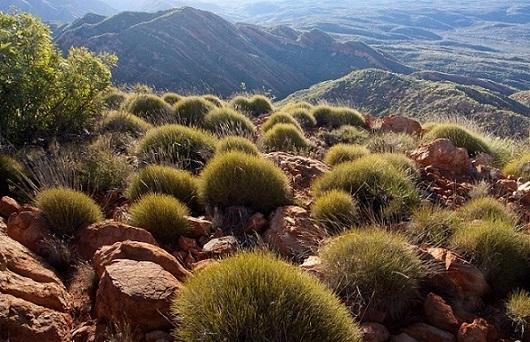 Растения Австралии: флора и фауна материка, редкие и исчезнувшие виды