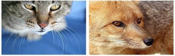 Млекопитающие животные: строение, общая характеристика и признаки класса, размножение
