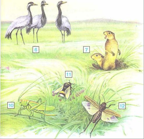 Растения степной зоны: особенности и характеристика природы, животный мир, экологические проблемы