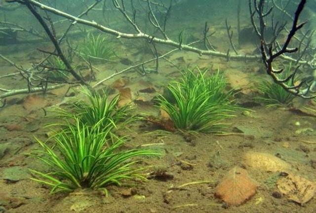 Растения из Красной книги: редкие и реликтовые представители флоры России