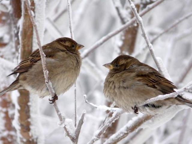Особенности строения птиц: питание и размножение представителей класса, биологическое значение