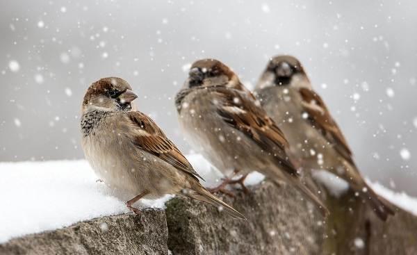 Группы птиц зимующие: особенности строения, разновидности, подкормка зимой
