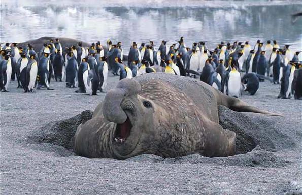 Антарктида: животные, птицы и растения материка, интересные факты