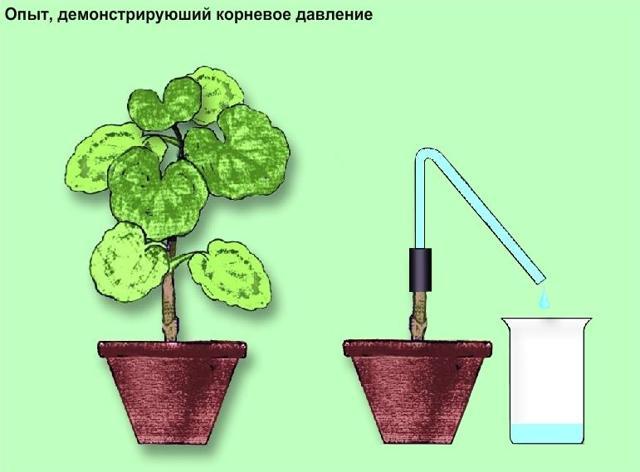 Минеральное питание растений - это почвенный способ усвоения питательных веществ