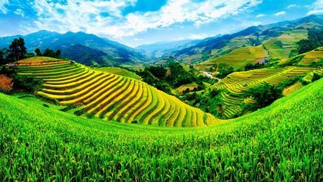 Субрегионы зарубежной Азии: новые индустриальные страны, минеральные ресурсы