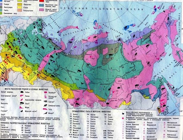 Природные зоны России: где находятся арктические пустыни и тундра на карте