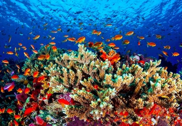 Жизнь в Тихом океане: формирование и распространение морских организмов