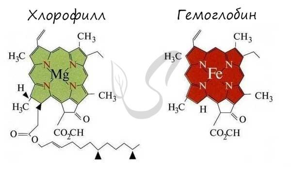 Фотосинтез значение в природе: световая и темновая стадии синтеза и их продукты
