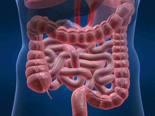Строение пищеварительной системы человека: отделы ЖКТ, функции, схема расположения кишечника